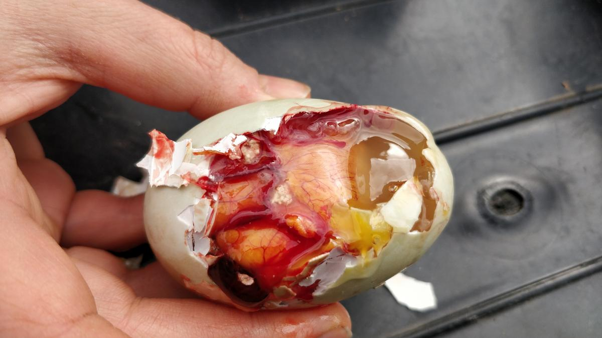The inside of the egg when packed